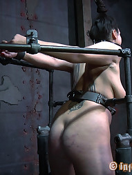 Dana Vixen Held Rigid, pic #5